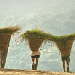 Nepal6.jpg