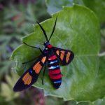 prachtig-insect.JPG